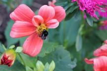 Blumenmahl