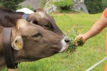 Wildblumen für die Nachbarn zur Begrüßung