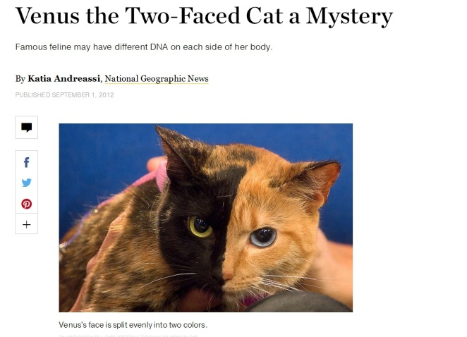 Screenshot von: http://news.nationalgeographic.com/news/2012/08/120831-venus-two-faced-cat-genetics-animals-science/