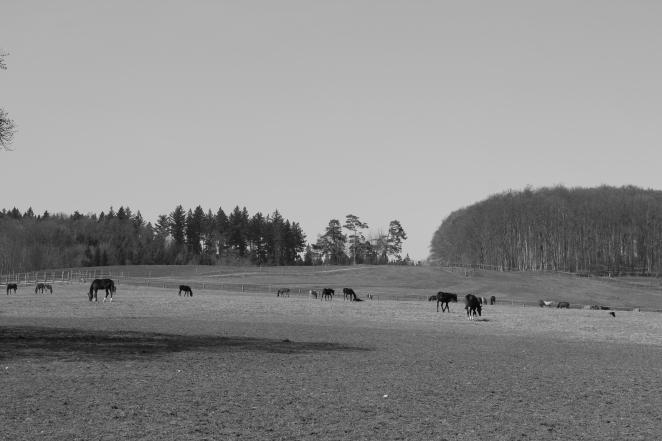 Pferdekoppeln säumen den Wanderweg